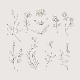 Hierbas botánicas minimalistas y flores silvestres en estilo vintage