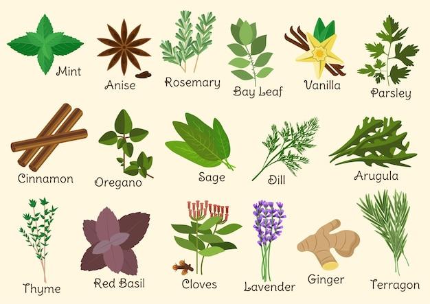 Hierbas, condimentos y especias con ramitas y semillas estragón y lavanda