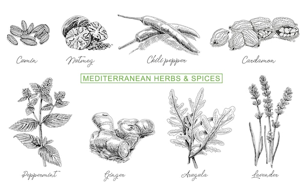 Hierbas culinarias