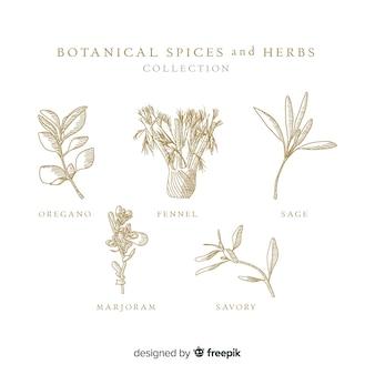 Hierbas y especias botánicas realistas dibujadas a mano