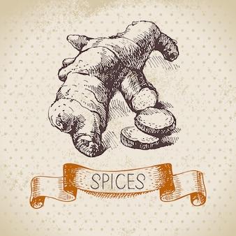 Hierbas y especias de cocina. fondo vintage con jengibre boceto dibujado a mano