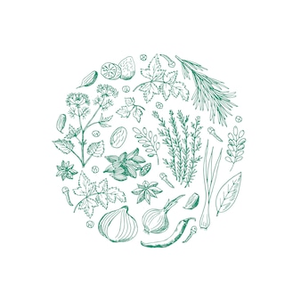 Hierbas y especias dibujadas a mano en forma de círculo