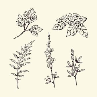 Hierbas y flores realistas