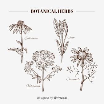 Hierbas y hojas botánicas