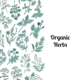 Hierbas medicinales dibujadas a mano
