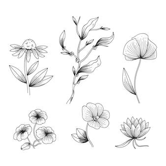 Hierbas realistas dibujadas a mano y flores silvestres