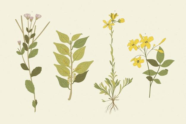 Hierbas realistas y flores silvestres