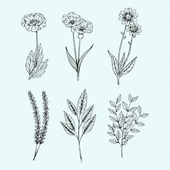 Hierbas silvestres botánicas en estilo vintage
