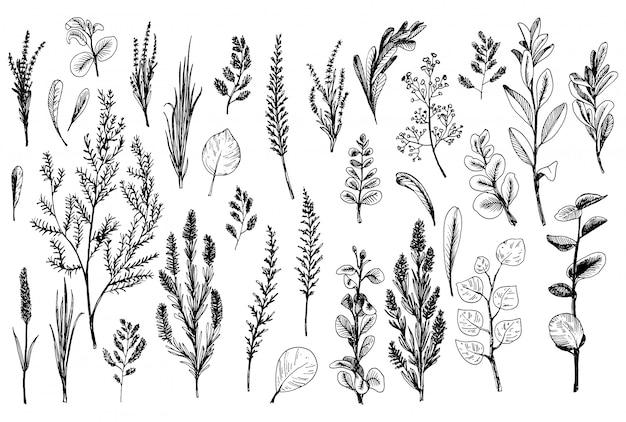 Hierbas silvestres y flores pintadas de línea negra.