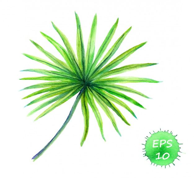 Hoja exótica de palmera datilera tropical.