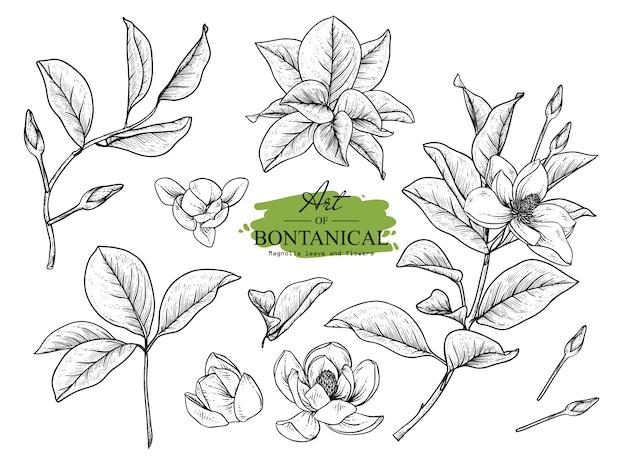 Hoja de magnolia y dibujos de flores.