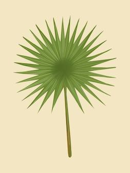 Hoja de palma de abanico verde tropical
