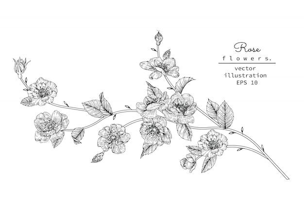 Hoja de rosa y dibujos de flores.