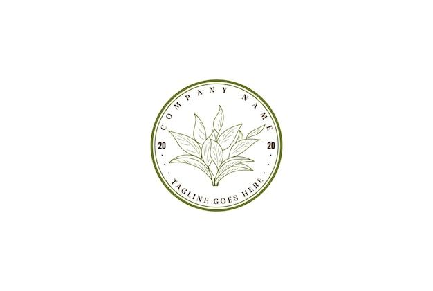Hoja té verde elegante minimalista vintage con hojas diseño logotipo