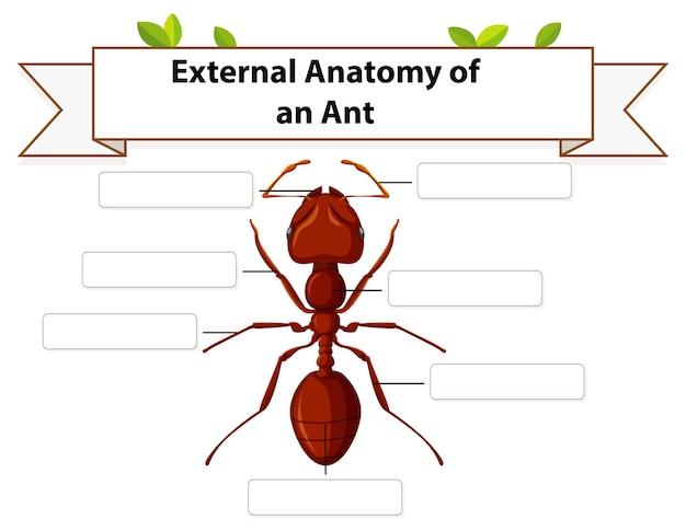 Hoja de trabajo de anatomía externa de una hormiga
