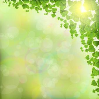 Hojas de los árboles sobre fondo verde abstracto