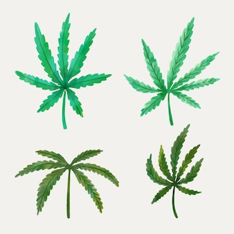Hojas de cannabis acuarela
