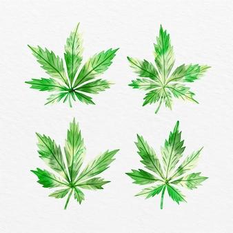 Hojas de cannabis en paquete de acuarela