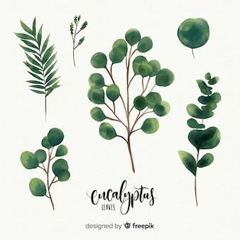 Hojas de eucalipto en acuarela