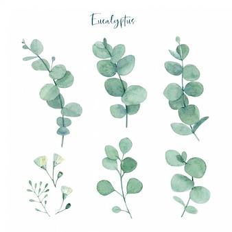 Hojas de eucalipto verde pintado a mano en acuarela con capullos