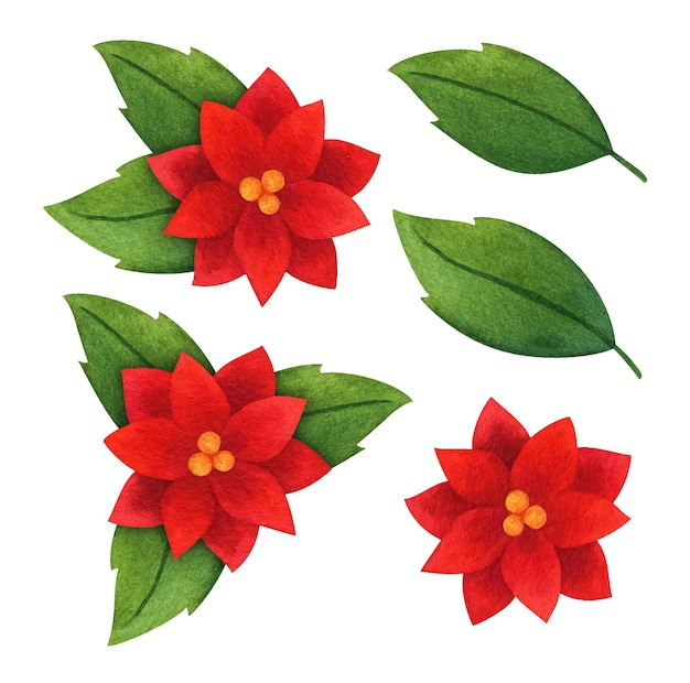 Hojas y flores rojas de poinsettia. conjunto de acuarelas de plantas navideñas. elementos botánicos para postales, estampados, imágenes prediseñadas