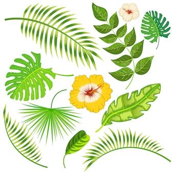 Hojas y flores tropicales