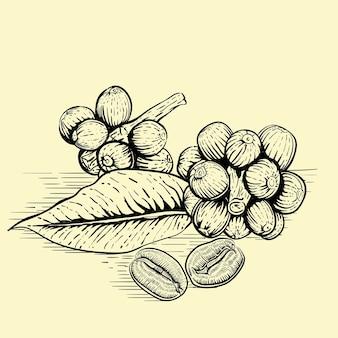 Hojas y granos de café