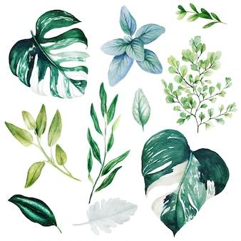 Hojas de monstera y adiantum, verde brillante de acuarela