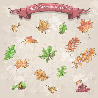 Hojas de otoño, bayas de viburnum, castañas y bellotas