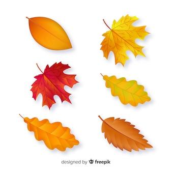 Hojas de otoño colección diseño plano