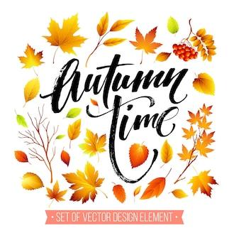 Hojas de otoño de color sobre fondo blanco.