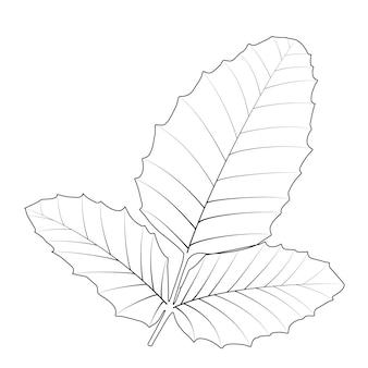Hojas de otoño naturalistas en blanco. ilustración de vector. eps10