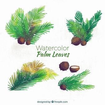 Hojas de palmeras y cocos de acuarela