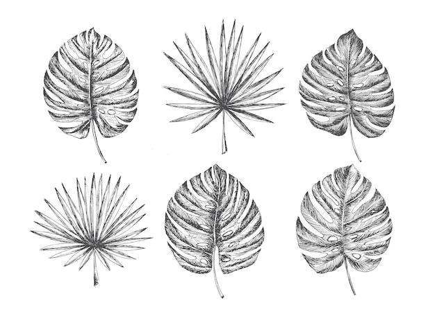 Hojas de palmeras tropicales dibujadas a mano illu