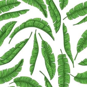 Hojas de palmeras tropicales de patrones sin fisuras, hoja de plátano de selva.