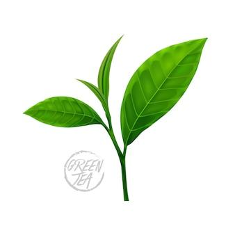 Hojas de te verde