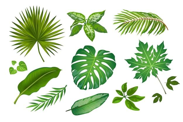 Hojas tropicales en conjunto de ilustraciones de estilo de dibujos animados