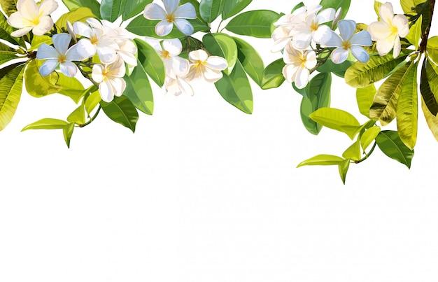 Hojas tropicales y flor de plumeria sobre fondo blanco