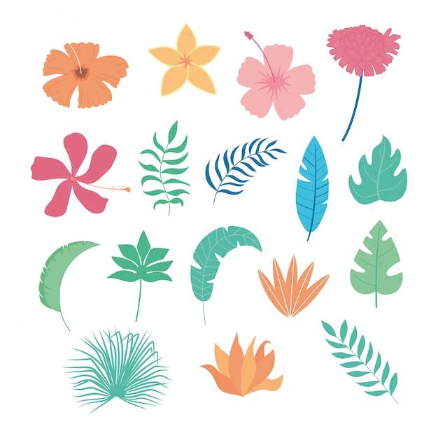 Hojas tropicales flores rama palmera follaje vegetación iconos