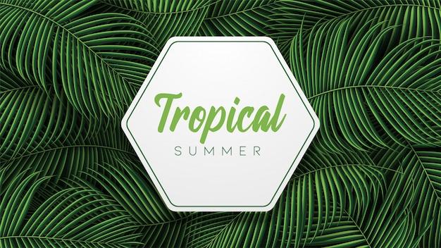 Hojas de verano tropical con plantas de la jungla