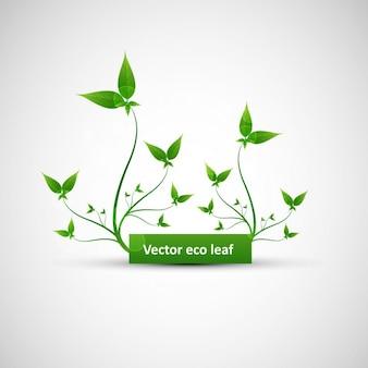 Hojas verdes del eco