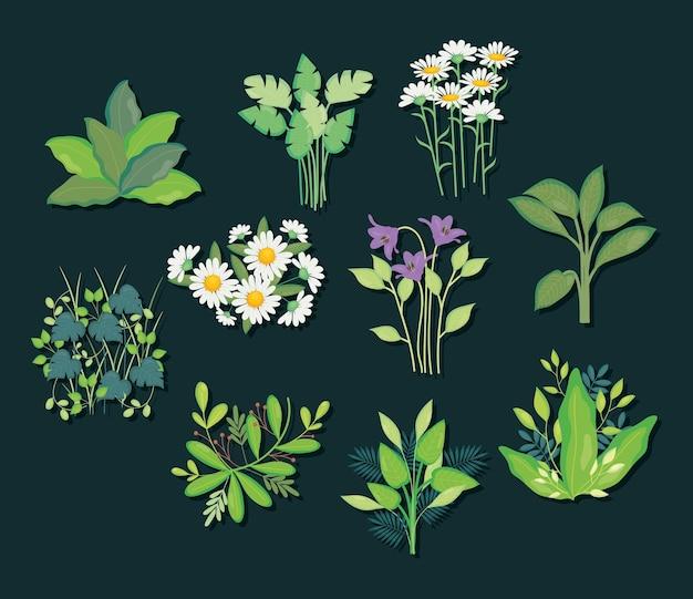 Hojas verdes y flores sobre fondo negro, colorido, ilustración