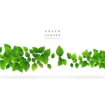 Hojas verdes flotantes en blanco