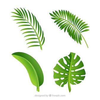 Hojas verdes de palmeras