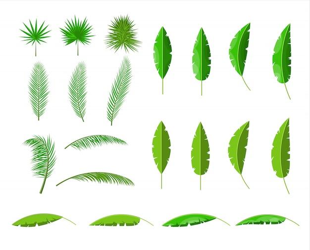 Hojas verdes tropicales. selva deja conjunto.