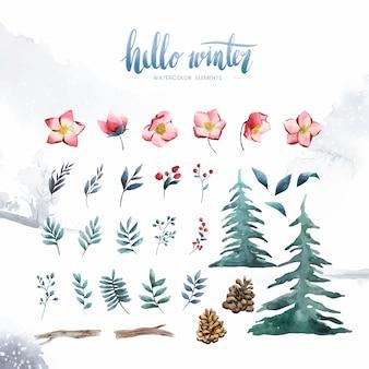 Hola plantas y flores de invierno pintadas por vector acuarela.