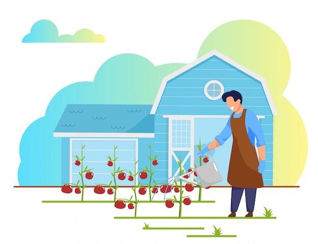 Hombre granjero trabaja en la cama del jardín regando tomates