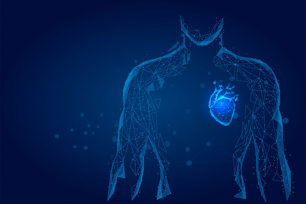 Hombre silueta corazón sano conectado puntos baja estructura metálica poli. doctor en línea medicina baja poli