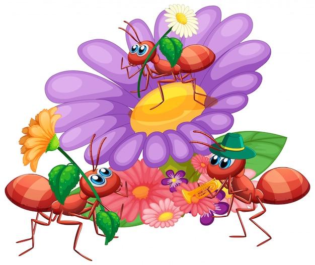 Hormigas con bella flor