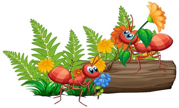 Hormigas en la naturaleza sobre fondo blanco